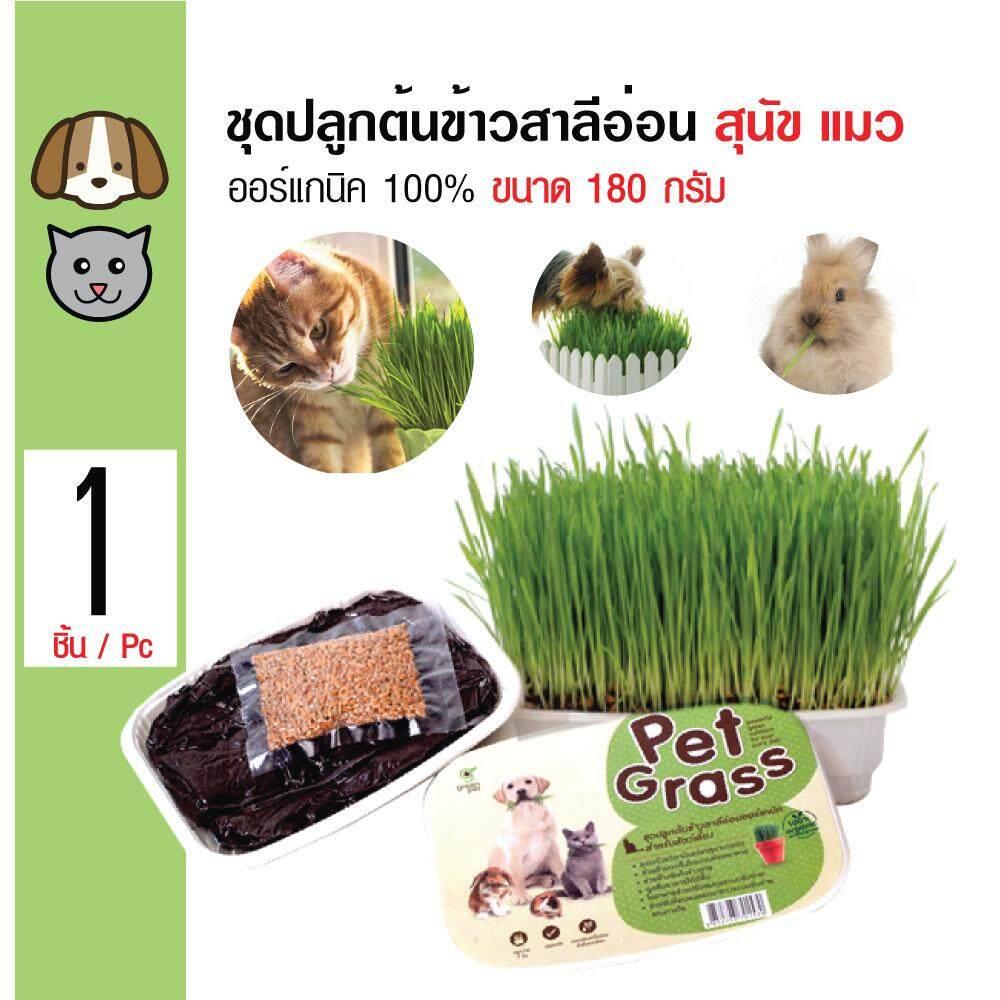 Green Pet Grass หญ้าปลูก ข้าวสาลี ชุดปลูกต้นข้าวสาลีอ่อนออร์แกนิค สำหรับสุนัข แมวและสัตว์เลี้ยง ขนาด 180 กรัม By Kpet.