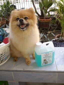 Pet and Paws แชมพูผสมครีมนวดสำหรับสุนัขและแมว สูตรอ่อนโยน บำรุงขนผิว ไม่แพ้ 100% (image 4)