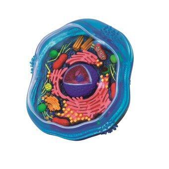 4D Vision หุ่นจำลองเซลล์สัตว์ 4 มิติ ...
