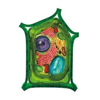 4D Vision หุ่นจำลองเซลล์พืช 4 มิติ ...