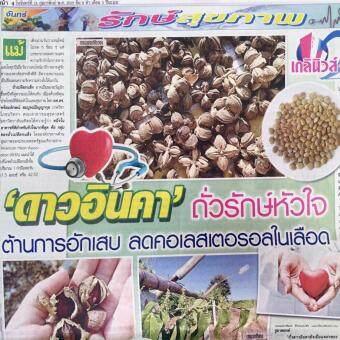ชาถั่วดาวอินคา (สมุนไพร) 20 ซอง 12 กล่อง UMB Herbal Tea (SachaInchi) (image 3)